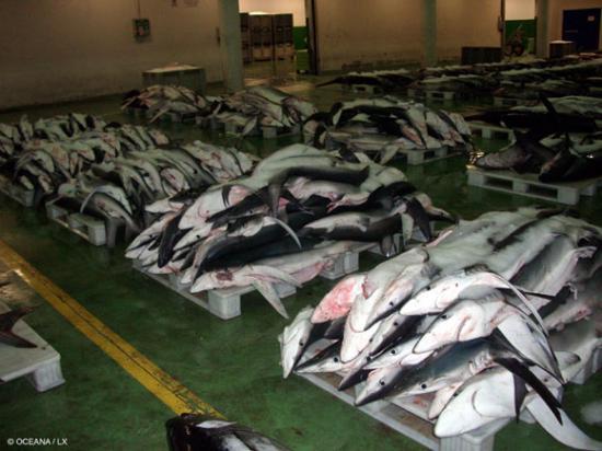 Extermination des requins